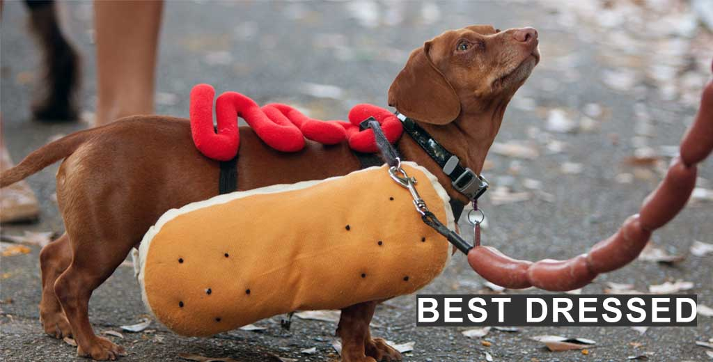 Best Dressed Category
